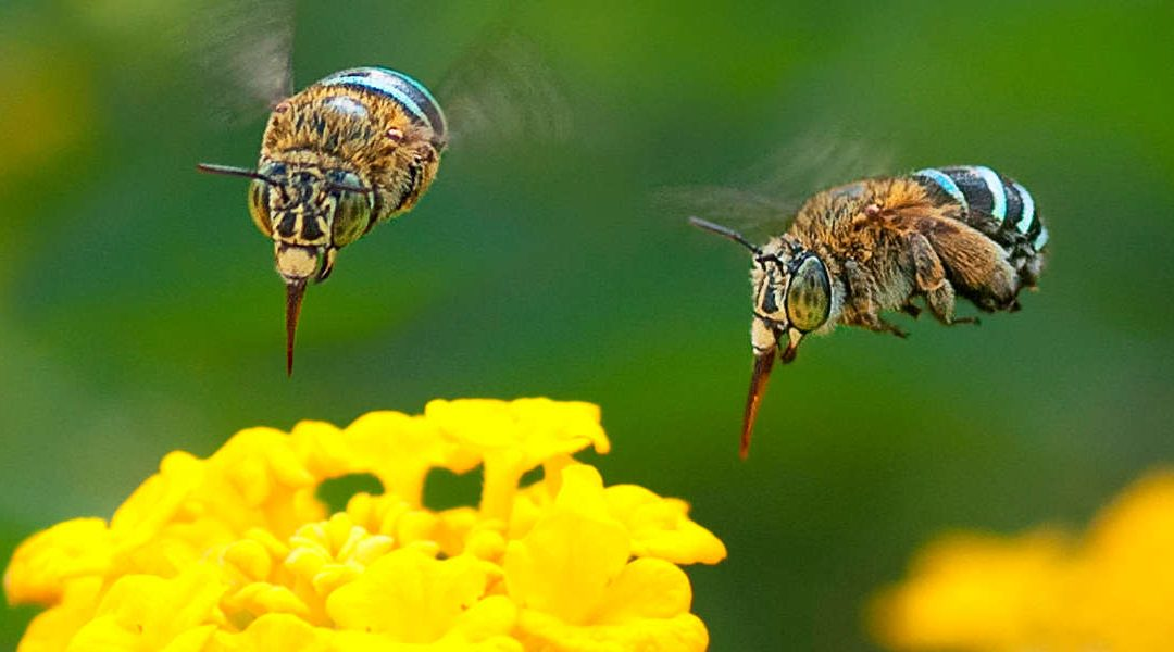 57th Beekeeping Scientific Conference 2020